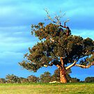 golden gum by fazza