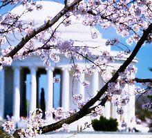 Jefferson Memorial Cherry Blossoms  by fatdogcreatives