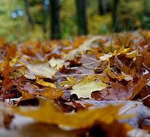 Fallen Leaves by AGODIPhoto