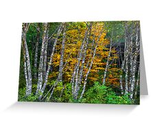 It's All About The Colors ~ Alder Trees ~ Greeting Card