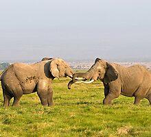 Elephant Fight by Valerija S.  Vlasov