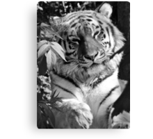 Tiger (1) Canvas Print