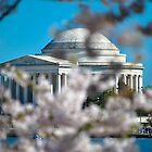 Cherry Blossom at Thomas Jefferson Memorial by Gustavo Bernal