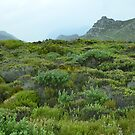 Hangklip Mountain and shrubbery (fynbos) by Pieta Pieterse