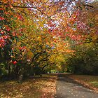 Autumn Lane, Mt Wilson by yolanda