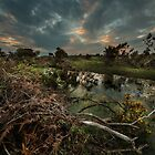 New Forest Sunset by nick board