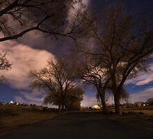 Tree View by IOBurque