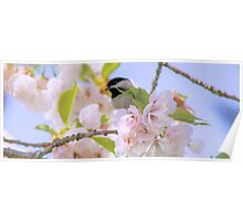 Backyard Chickadee Poster
