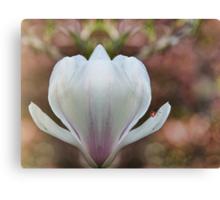 Vintage magnolia Canvas Print