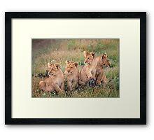 Four cubs Framed Print