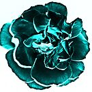 Teal Rose by shalisa