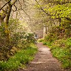 Woodland Path with Window by Sue Knowles