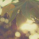 Green Leaf Bokeh by Honey Malek
