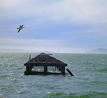 Berkeley Pier by David Denny