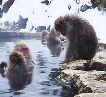 Snow monkeys2 by Tsuyoshi