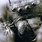 Those Crazy Jumping Spider Eyes by Nazareth