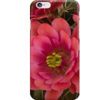 Pink Hedgehog Cactus Flowers  iPhone Case/Skin
