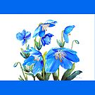 Himalayan Blue Poppies Throw Pillow! by Pat Yager