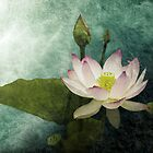 Lily In The Garden Pond by Maria Murphy
