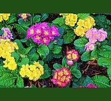 Floral Feast by CarolM