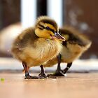 Ducklings - NZ by AndreaEL