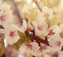 Touch of spring by CarlaSophia