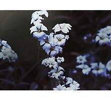 Flowers at Dusk Photographic Print