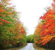 Baxter state park , Maine by Melinda  Ison - Poor