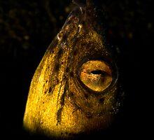 Golden Eye by Valerija S.  Vlasov