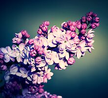 Lovely Lilac by Gingerhead