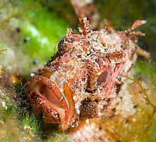 Dwarf Scorpionfish by Valerija S.  Vlasov