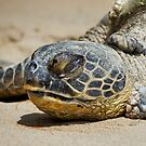 Honu by Alex Preiss