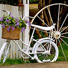 Blooming Bicycle by Carol Clifford
