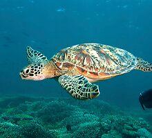 Turtle Flight by Valerija S.  Vlasov