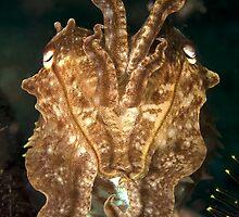 Reef Cuttlefish by Valerija S.  Vlasov