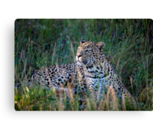 Leopard South Africa  Canvas Print