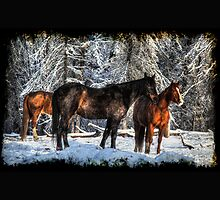 "Winter Horses ""Year of the Horse"" Equine photo by Val  Brackenridge"