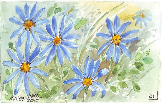 Kingfisher daisies (Felicia amelloidies)  by Maree  Clarkson