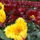 tulips by neon-gobi