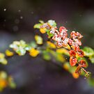 Frosty Fagus by Mel Sinclair