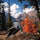 North Jenny Lake, Grand Teton National Park by KellyHeaton