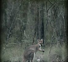 Wallaby Teatime II by Clare Colins