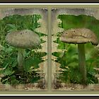 As I Age - A Mushroom's Tale by MotherNature2