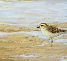 Shore - Pacific golden plover (Pluvialis fulva) by Laura Grogan