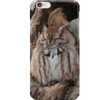 Sleepy Screech Owl iPhone Case/Skin