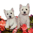 westies In the garden by IowaArtist