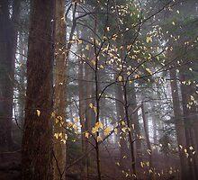 Beech Leaf Starlight (Fagus grandifolia) by er1kksen