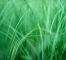 soft green grass by lockstockbarrel