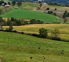 Western Illinois Farmland by Roger Passman
