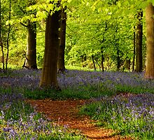 Bluebell path by Rachel Slater